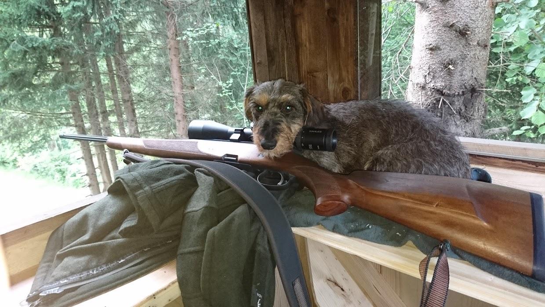 Heidi bei der Jagd