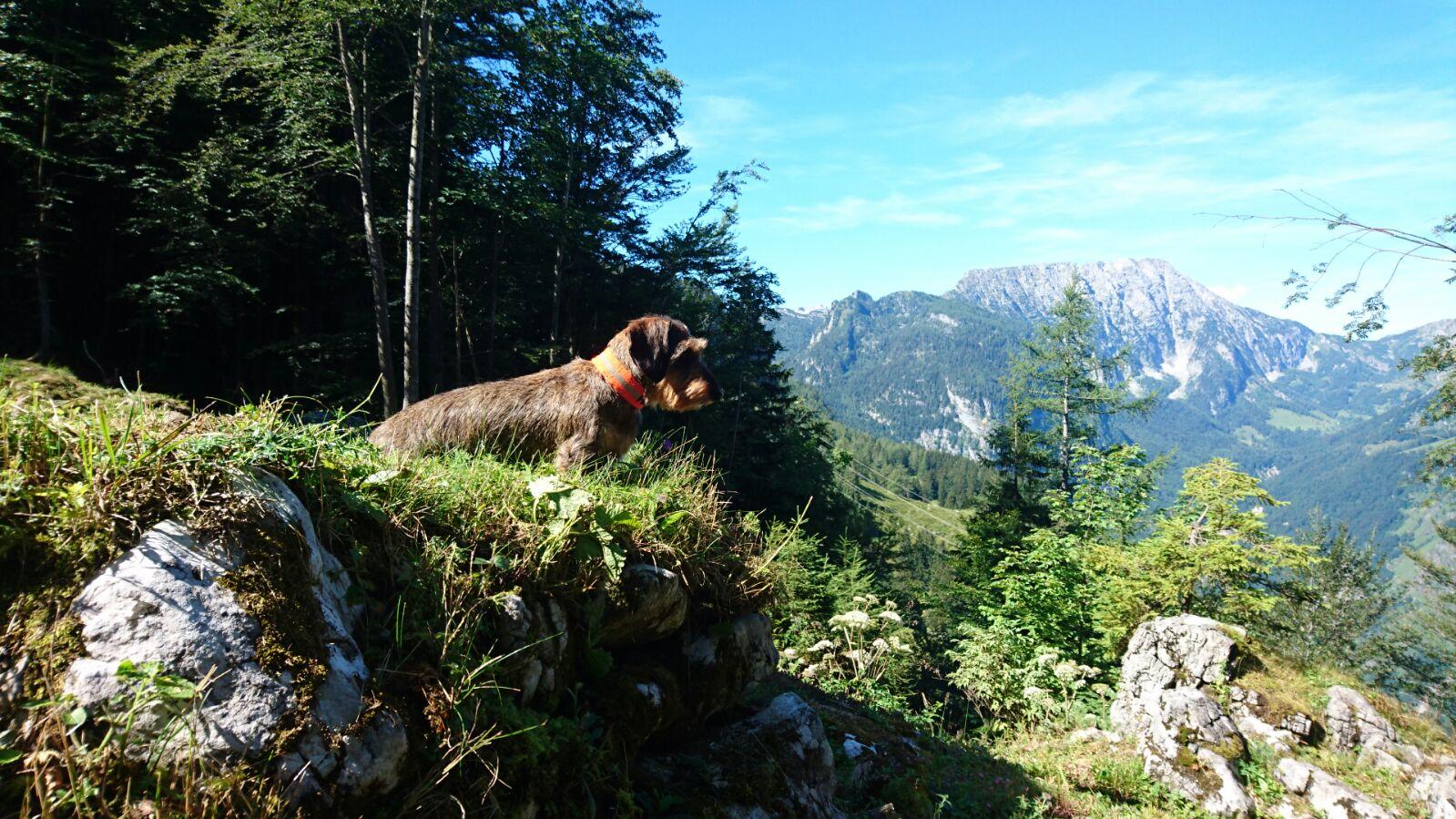 Heidi im Hintergrund Bergpanorama Bluntautal