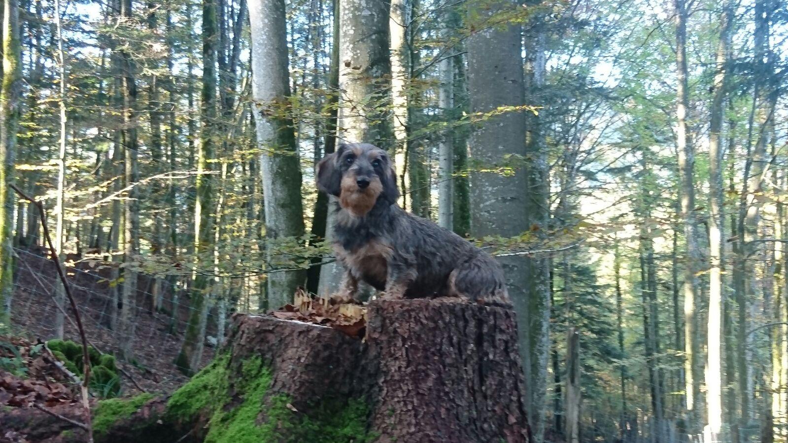 Heide vor der Fuchsjagd